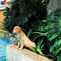 KC reg Purebred Golden Retriever Puppies