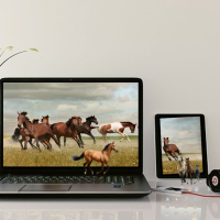 FREE CERTIFIED EQUESTRIAN COURSES-ONLINE