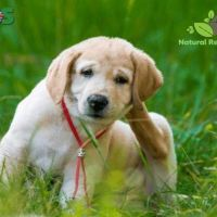 Five natural tips to get rid of fleas on your dog | Home Remedies To K