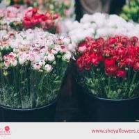 Avail Fresh Flowers in London