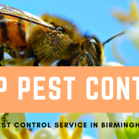 Say Goodbye to pest related problems