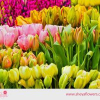 Best Forecourts Flower Supplier in London